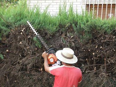 Limpieza jardines Madrid